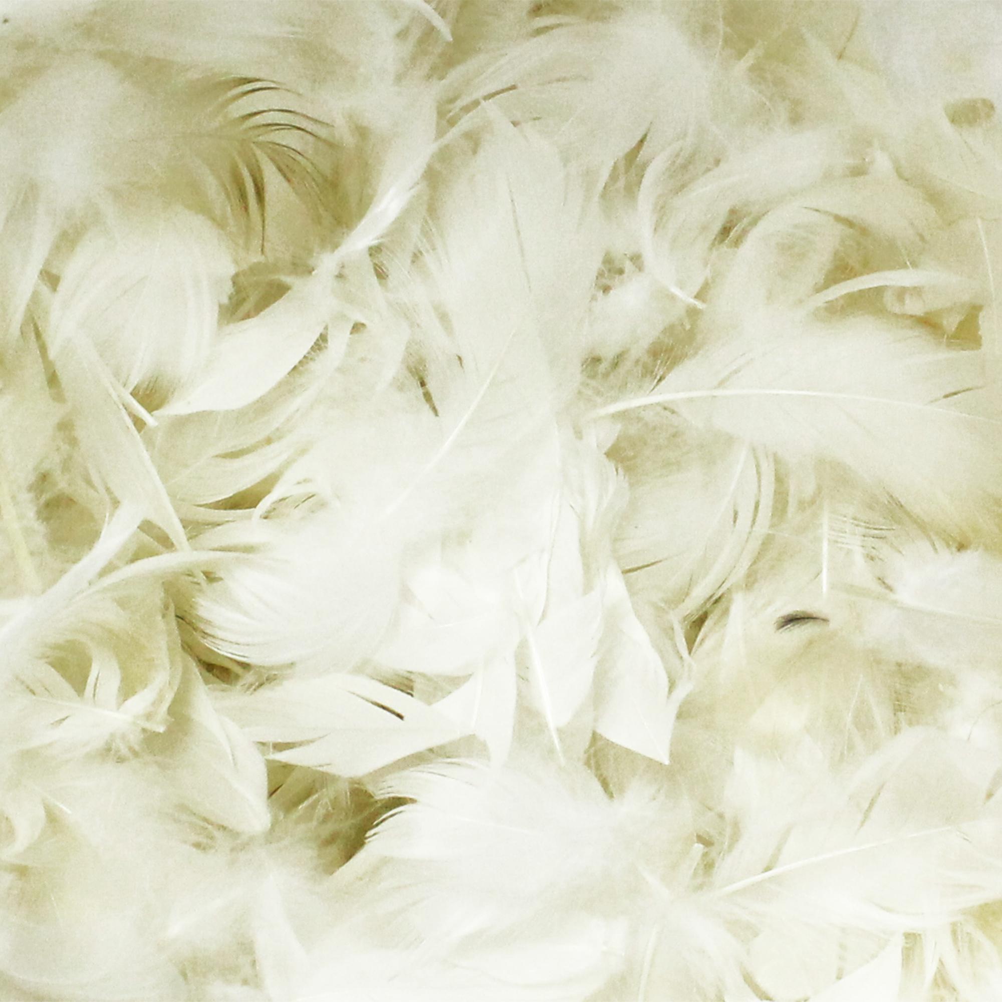 rembourrage naturel plumes blanches de carnards sac 1 kg. Black Bedroom Furniture Sets. Home Design Ideas